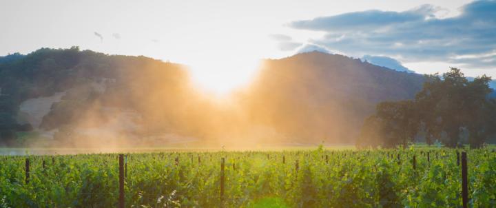 Destination: Napa Valley
